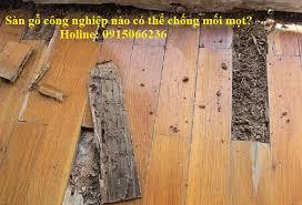 cách xử lý sàn gỗ bị mối mọt, sàn gỗ công nghiệp có chống mối,
